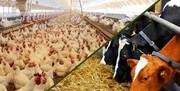 تداوم بحران در ترخیص نهادههای پایه کشاورزی