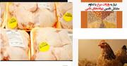 دولت مجوز واردات 50 هزار تن مرغ با ارز 4200 تومانی را صادر کرد!