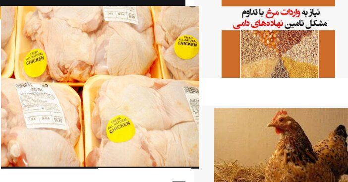 سینه مرغ 45 هزار تومان، در بازار چه خبر است؟