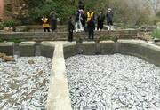 برق قطع شد؛ 2 تن ماهی مُرد