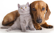 تجارت صدها میلیون دلاری اماراتی ها از سگ و گربه بازی