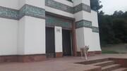 نمازخانه یا محل زندگی سگ؟!