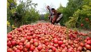 بیش از 2 هزار تن انار در شهربابک تولید می شود